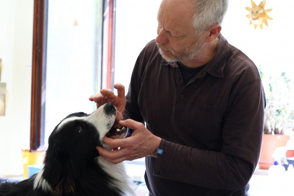eingelieferte tiere in tierklinik weilheim